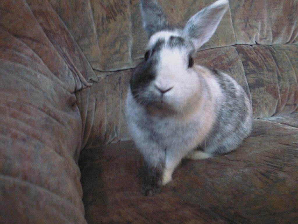 liebe kaninchen abzugeben tiere hof saale. Black Bedroom Furniture Sets. Home Design Ideas